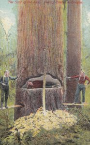 Logging , Oregon , 1911