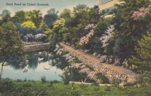 Duck Pond at Calart Grounds - Providence RI, Rhode Island - Linen