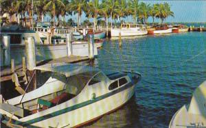 Florida Fort Myers Palm Lined Yacht Basin
