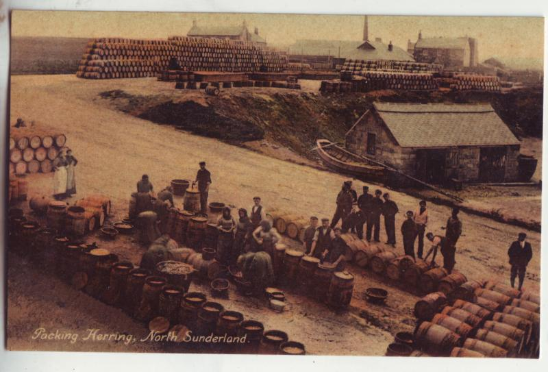 P851 old card fishing packing herring north sunderland england, great britain