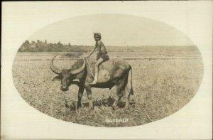 Native Boy Riding Water Buffalo Ethnic Netherlands Cancel Real Photo Postcard