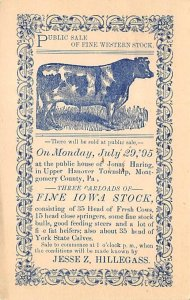 Cow Post Card Fine Western Stock July 29th, 1895 Montgomery County, Pennsylva...