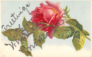 Whitehall Montana Rose Flower Greeting Antique Postcard K86051