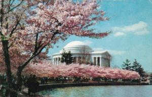 Flowers Jefferson Memorial With Cherry Blossoms Washington D C 1960