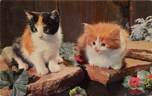 Cat Post Card What's That 1970