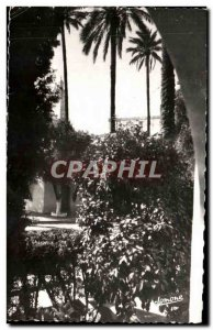 Old Postcard Laghouat Gardens of the Joint Municipality