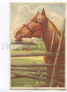 279655 FINLAND Portrait HEAD of HORSE vintage Color PC