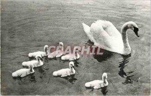 Modern Postcard The Lake of Swans