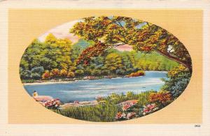 USA N.C. Asheville nature landscape, river, forest