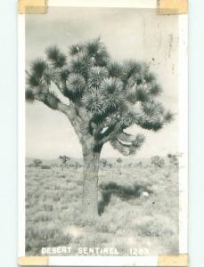 Pre-1950 rppc NICE VIEW State Of California CA W0669