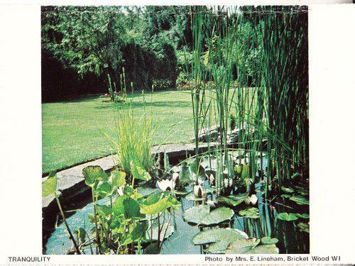 Bricket Wood Village Garden Gardens Pond Hertfordshire Womens Institute Postcard