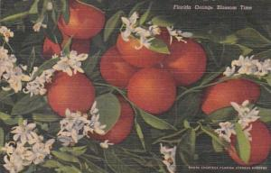 Florida Orange Blossom Time Curteich