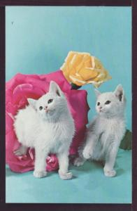 Kittens and Flowers Post Card  3314