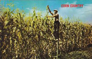 Corn Country Where The Corn Grows Tall