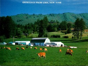 New York Greetings From Lima Grazing Cattle Farming Scene