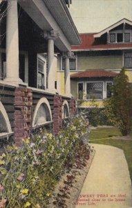 NEW YORK CITY , 1912 ; SWEET PEAS planted close to Stumpp & Walter Co. Bldg