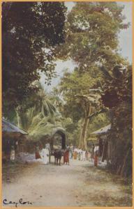 Native Roadside scene, Ceylon (Now Sri Lanka)