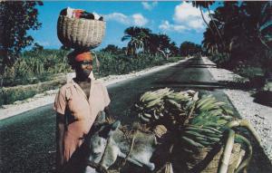 Marketwomen with Donkey, HAITI, West Indies, 1940s-60s