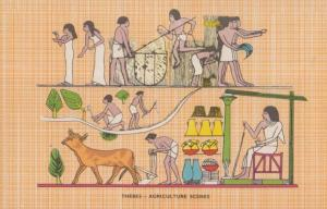 Thebes Agriculture Scenes Mural Antique Egyptian Postcard