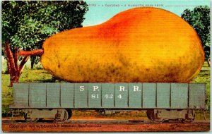 1910s California Fruit EXAGGERATION Postcard Mammoth Pear Rail Car Mitchell