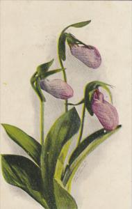 Fred Lounsbury Flower Series