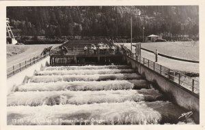Oregon Bonneville Dam Fish Ladder 1950 Real Photo sk4119