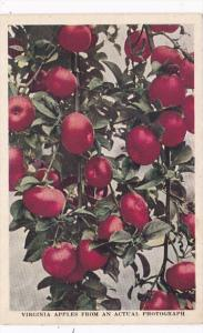 Virginia Apples from The Shenandoah Valley