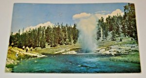 1954 Riverside Geyser Yellowstone National Park Wyoming Water Treeline Nature