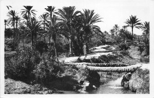Lot121  gabes a bridge of palm trees tunisia africa real photo