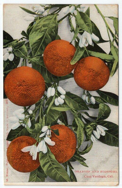 Casa Verduga, Cal., Oranges and Blossoms