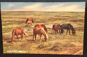 Postcard Unused but w/Writing On back Dartmoor Ponies England LB