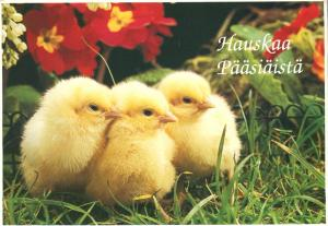 Baby Chickens Hauskaa Paasiaista - Happy Easter Greetings from Finland - pm 1996