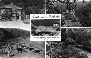 Gruss vom Netzkater Halle Saale, Creek Panorama Cattles Cat Katze