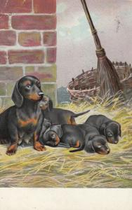 Mother Dachshund with four puppies, 1900-10s