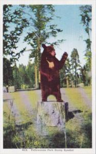 Yellowstone Park Stump Soeaker Brown Bear Yellowstone National Park