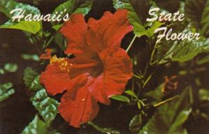 Hawaii Flowers Hibiscus The State Flower