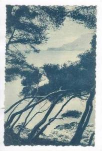 Cap Martin, France,1912 ; Trees