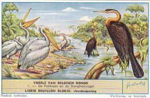 Liebig Trade Card s1632 Birds Of Congo No 1 Pelikaan & Slanghalsvogel