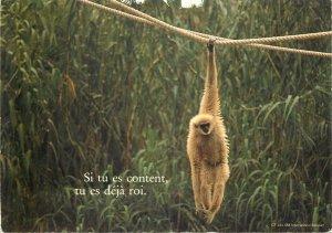 animal humor monkey funny Post card