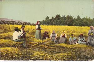 Harvest Scene Hay Making