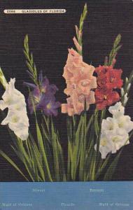 Maid Of Orleans, Minuet, Bennett, Gladiolus Of Florida, 1930-1940s
