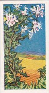 Glengettie Trade Card Wild Flowers No 15 Honeysuckle
