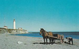 Horse and fishing cart, Cap des Roseiers Lighthouse, Gaspe,  Quebec,  Canada,...