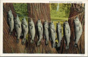 Black Bass Caught at Detroit Lakes MN Fish Fishing c1935 RPO Postcard F47