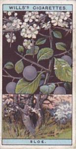 Wills Vintage Cigarette Card Flowering Trees &amp  Shrubs 1924 No 10 Blacktho...
