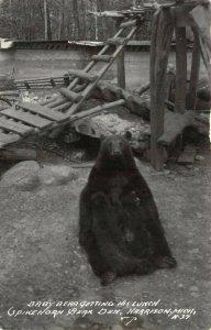 LP54 Harrison  Michigan  Postcard RPPC Spikehorn Bear Den