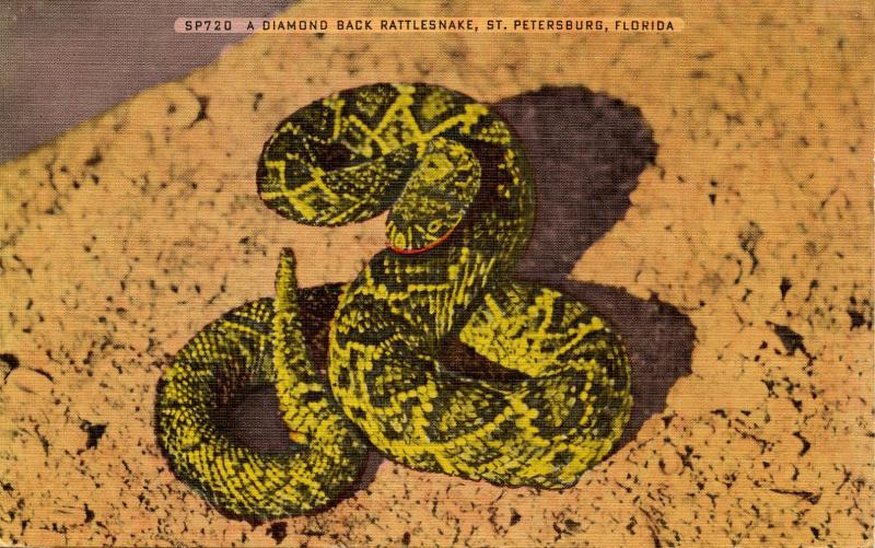 Diamond-Back Rattlesnake