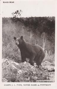RP: Black Bear, Camps J. L. Fyfe, Notre Dame de Pontman, LAURENTIDES, Quebec, Ca