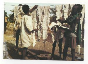 Africa Drying Snake Skins IRIS Afrique en Couleurs Postcard