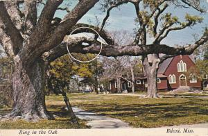 Ring In The Oak Tree Biloxi Mississippi